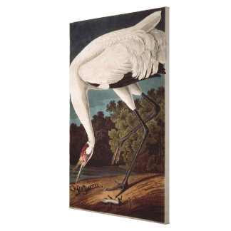 Whooping Crane, from 'Birds of America' Canvas Print