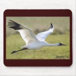 Whooping Crane (Grus americana) Mouse Pad