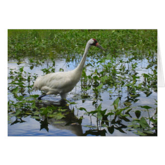 Whooping Crane Hunting Card