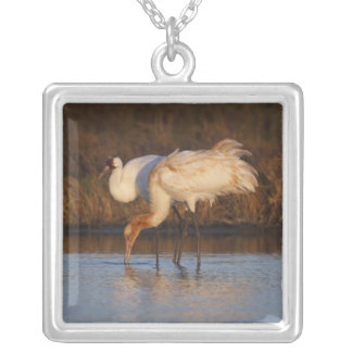 Whooping Crane wintering 2 Silver Plated Necklace