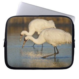 Whooping Crane wintering Laptop Sleeve