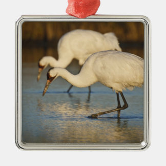 Whooping Crane wintering Silver-Colored Square Decoration