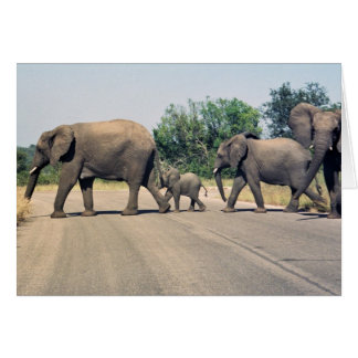 Why did the elephant cross the road 2 greeting cards