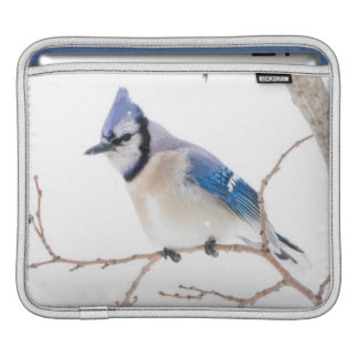 Wichita County, Texas. Blue Jay5 iPad Sleeve