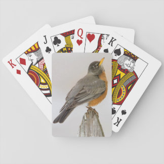 Wichita Falls, Texas. American Robin Playing Cards