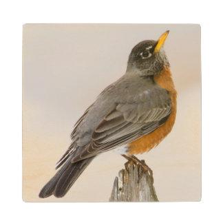 Wichita Falls, Texas. American Robin Wood Coaster