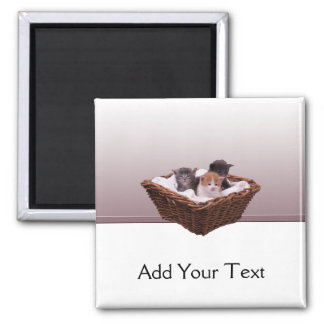 Wicker Basket with Kittens Square Magnet