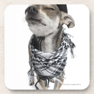 Wide-angle of a Chihuahua with his eyes closed Coaster