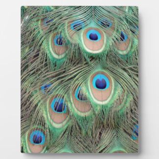 Wide Spreed Of Peacock Eyes Plaque