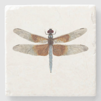 Widow Skimmer Dragonfly Coaster
