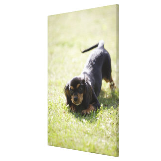 Wiener dog (black) 2 canvas print