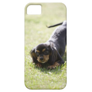 Wiener dog (black) 2 case for the iPhone 5