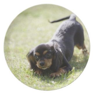 Wiener dog (black) 2 dinner plate