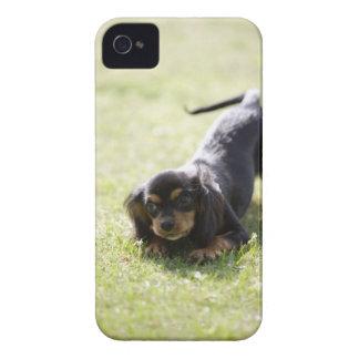 Wiener dog (black) 2 iPhone 4 cover