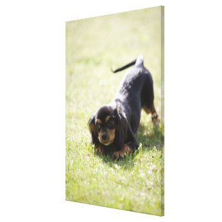 Wiener dog (black) canvas print