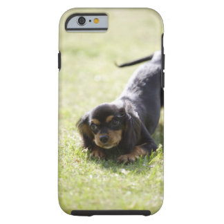 Wiener dog (black) tough iPhone 6 case