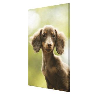 Wiener Dog (brown) 2 Canvas Print