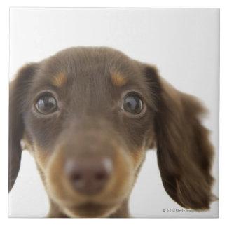 Wiener Dog (brown) 2 Tile