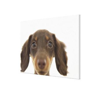 Wiener Dog (brown) Canvas Print