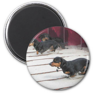 Wiener Dogs Races Refrigerator Magnet