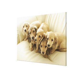 Wiener puppies canvas print