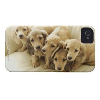 Wiener puppies iPhone 4 case