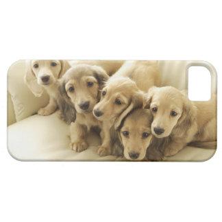Wiener puppies iPhone 5 cover