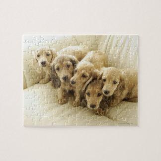 Wiener puppies jigsaw puzzle
