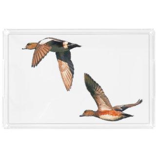 Wigeon Duck Birds Wildlife Animals Tray