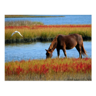 Wild About Horses Postcard