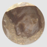 Wild About Wombats Sticker