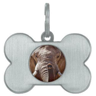Wild Africa Elephant Head Pet Tag