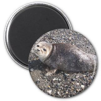 wild alaskan seal magnets