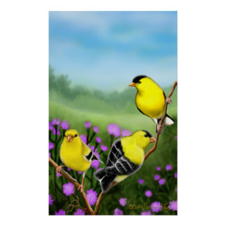 Wild American Goldfinches Print