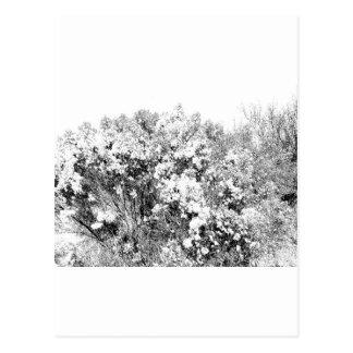 Wild and Fuzzy Desert Shrub Postcard
