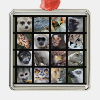 Wild Animal Faces -- Mammals, Reptiles, Birds Silver-Colored Square Decoration