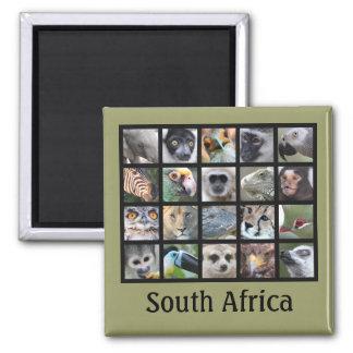 Wild Animal Faces -- Mammals, Reptiles, Birds Square Magnet