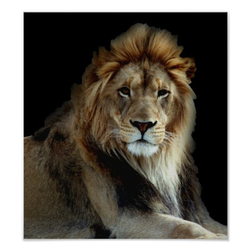 Wild Animal Park Lions Poster
