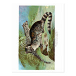 wild animal postcard