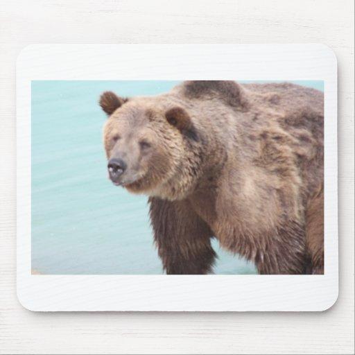 wild,animal,water,wildlife,bear,colorado mouse pad