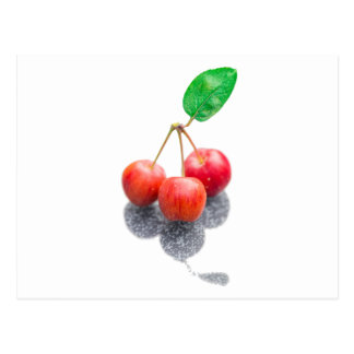 Wild Apples Postcard