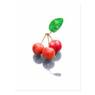 Wild Apples Postcard