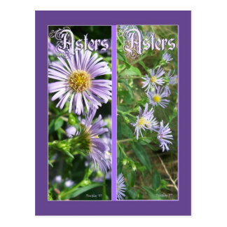 WILD ASTERS BOOKMARKS POSTCARD