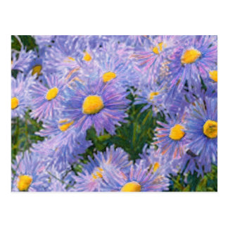 Wild Asters Mixed Media Drawing Postcard