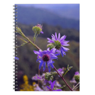 Wild Asters Notebook