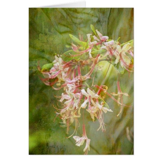 Wild Azalea Blossoms = Springtime Card