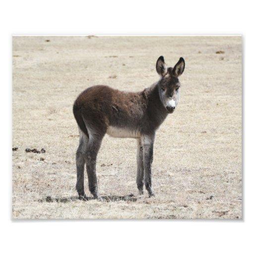 Wild Baby Donkey 8x10 Photo