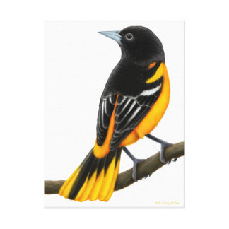 Wild Baltimore Oriole Wrapped Canvas Gallery Wrapped Canvas