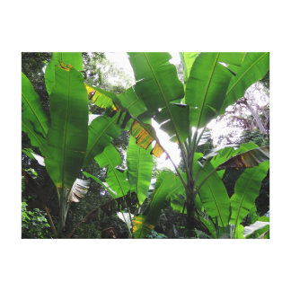 Wild Banana Plants Canvas Print