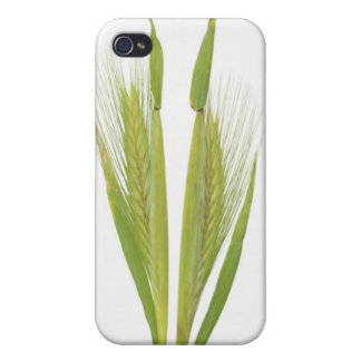 Wild barley (hordeum) iPhone 4/4S cover